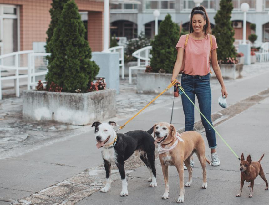Quanto prende una dog sitter all'ora